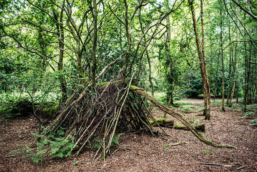 Temporary Shelter, Abinger Roughs